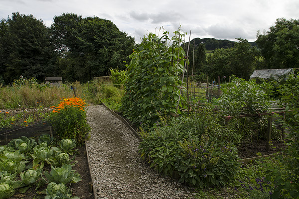 Image of Rowsley allotments